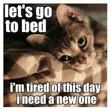 Tired Cat Meme - pin by lo on 2 cute pinterest cat animal and funny animal