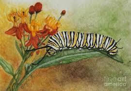 monarch caterpillar and milkweed painting by angela koehler