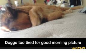 Too Tired Meme - doggo too tired for good morning picture ifunnyco doggo meme on