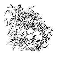 bird u0027s nest and spring flowers coloring page for kids seasons