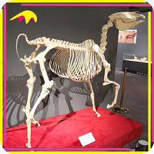 Halloween Skeletons For Sale Horse Skeleton Horse Skeleton Suppliers And Manufacturers At