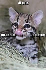 funny cat licking meme bajiroo com
