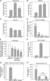 adam9 is a novel product of polymorphonuclear neutrophils