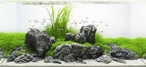 Aquascaping Rocks 10 Kg Grey Mountain Rock Stone Aquarium Iwagumi Style Set Of