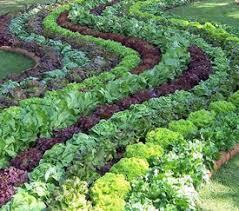 Fall Vegetable Garden Plants by Garden Plants Veggies Pdf
