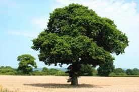 trees lovetoknow