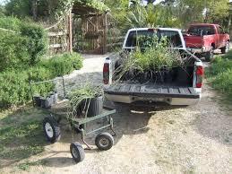 texas native plants nursery about medina garden nursey medina garden nursery