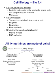 plant cell anatomy functions choice image human anatomy learning