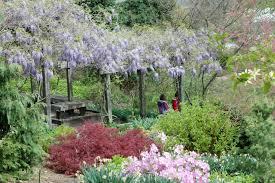 colorado u s japanese gardens the japanese garden opens dawes arboretum