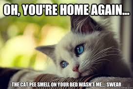 Animal In Bed Meme - cat urine on bed cat urine problems eliminated