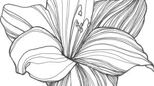 drawing of a flower how to draw a flower tattoo step step tattoos