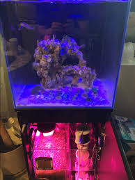 best led refugium light suggestions for refugium lighting reef2reef saltwater and reef