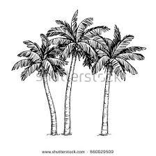 hand drawn vector illustration coconut palm stock vector 660029509