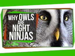 why owls are night ninjas youtube
