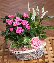 mothers day plants bunches s day range 2014 on flipboard
