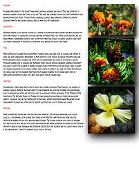 why gardens need flowers