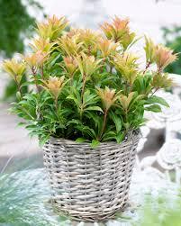 Pflanzen Fur Japanischen Garten Pflanzen Blumenbüro Holland Newsroom