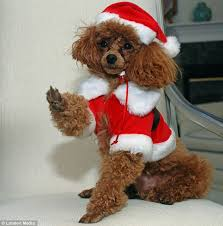 cute dog christmas wallpapers santa paws claws and even hooves cute dogs lizards and horses