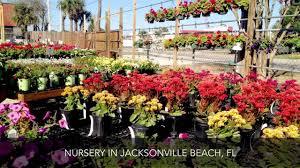 native plant nursery florida rockaway garden center nursery jacksonville beach fl youtube