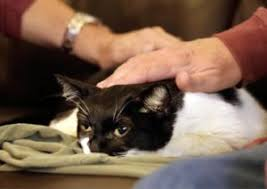 pet euthanasia atlanta dog and cat home euthanasia service
