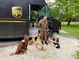 ups drivers show for dogs they meet on delivery route cbs