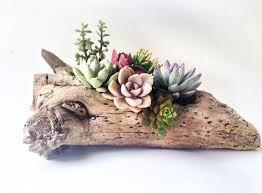 Driftwood Home Decor Succulent Driftwood Planter Home Decor Office Decor Holiday