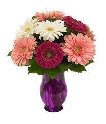 gerbera colors gerbera wishes at from you flowers