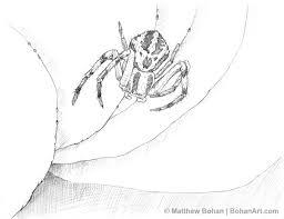 crab spider pencil sketch 2 bohan art
