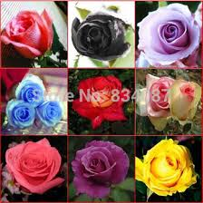 black roses for sale cheap real black roses sale find real black roses sale deals on