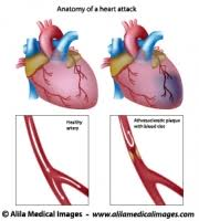 Diagram Heart Anatomy Blood Archives Medical Information Illustrated