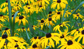 native plants of pennsylvania biopgh blog wild about wildflowers phipps conservatory and