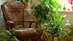 14 ways to avoid and deal with indoor plant pests