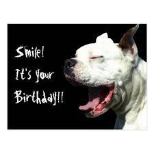 boxer dog meme dog birthday meme funny boxer dog memes dog breeds picture