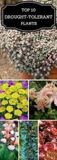 best 25 small flower gardens ideas on pinterest small flowers best 25 small flower gardens ideas on pinterest small flowers flower garden design and front yard tree ideas