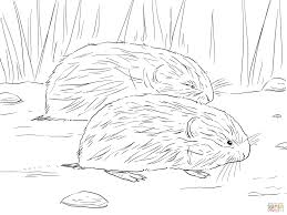 brown lemming coloring page free printable coloring pages