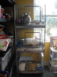 Rabbit Hutch Indoor Exclusively Rabbits Cage Care For Indoor Bunnies And Stacker Cages