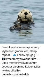 Sea Otter Meme - 25 best memes about sea otters sea otters memes