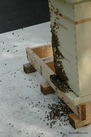 parts of a beehive beginner beekeeper u0027s guide beekeeping
