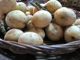 fruits in season atis lanzones and rambutan u2013 domestic urbanite