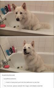 Funny Animal Memes Tumblr - tumblr dogs album on imgur