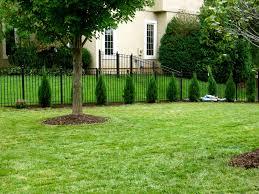 backyards splendid backyard trees for privacy trees for privacy