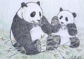 panda color pencil drawing poyee lam0321 flickr