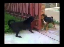 Dog Barking Meme - i don t know what s the problem with those 2 dogs barking each