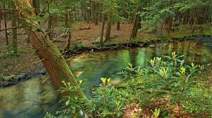 Pennsylvania forest images Pennsylvania to start fracking sensitive state forestland grist jpg