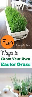 bulk easter grass grow your own easter basket grass easter baskets potting soil
