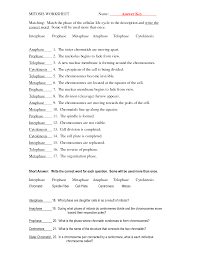 Homophone Worksheet Mitosis Questions Worksheet Google Search Bio I Cells Cell