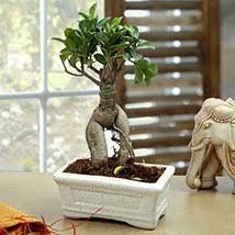 Plant Delivery Plants Online Buy Green Plants Online Plant Nursery Ferns N