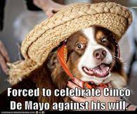 Memes 5 De Mayo - cinco de mayo funny memes pictures photos images and pics for