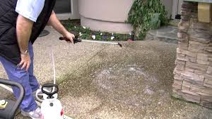 How To Remove Lichen From Patio The Carey Brothers Present