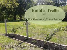 build a trellis for blackberries and raspberries one acre